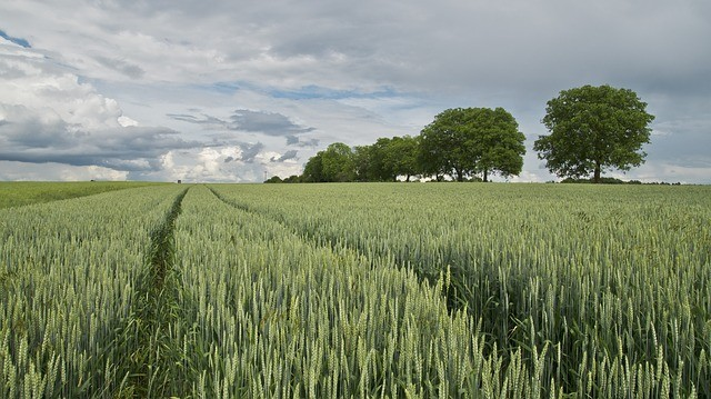 ORIGIN GREEN (BORD BIA), la charte de développement durable qui engage 60 000 éleveurs et  450 industriels irlandais