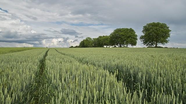 La coopérative agricole VIVESCIA  lance, avec ses adhérents, la marque Respect'in  de céréales durables