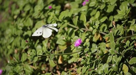 Sensibiliser les adultes et les enfants à la préservation des plantes sauvages avec le CBNBL