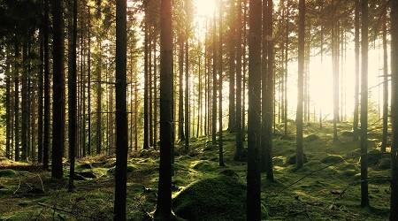 GASMA horticulturist uses wood energy