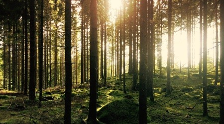 The Finnish firm UPM encourages the sustainable management of its forests.