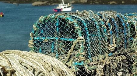 Partenariat entre DELHAIZE Belgique et WWF pour une pêche durable