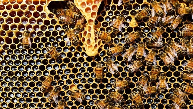 GROUPE LEADER installe des ruches pour la biodiversité
