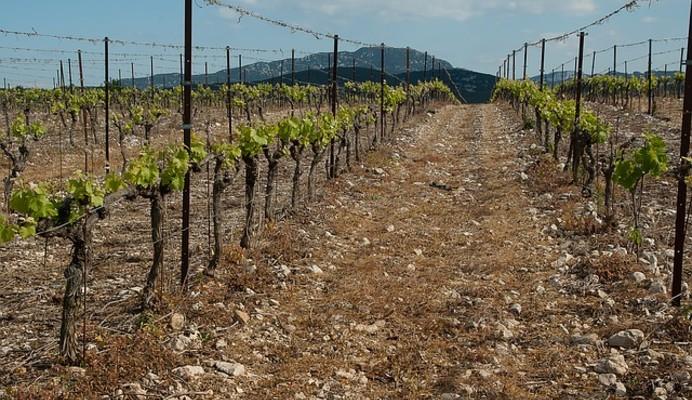 Les Vignerons de Buzet s'engagent pour une viticulture responsable